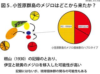 鳥学通信図5杉田.png