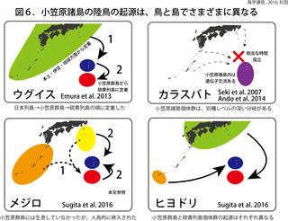 鳥学通信図6杉田.png
