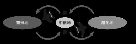 fig4_hasegawa.png